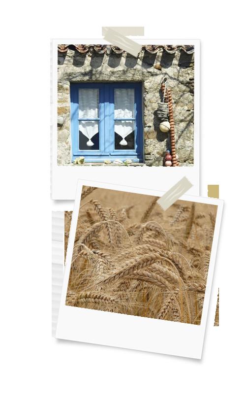 Maison bretonne et pailles de seigle